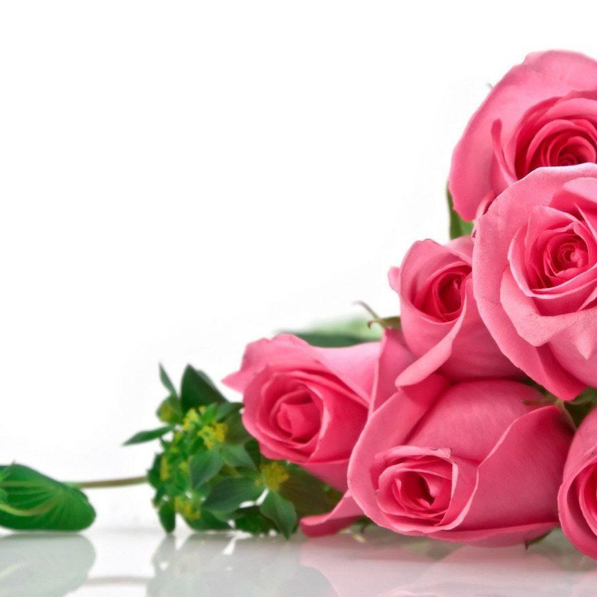 Productos destacados: Frutales y rosales