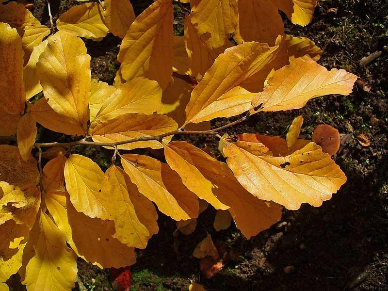 10 árboles para el otoño