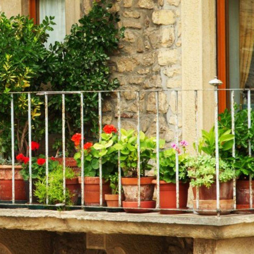 Plantas de temporada otoño-invierno para terraza y balcón